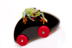 Frog Prince and Toy Royalty Free Stock Photography