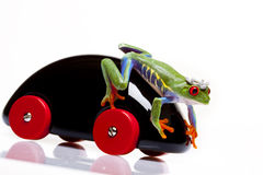 Frog Prince and Toy Royalty Free Stock Images