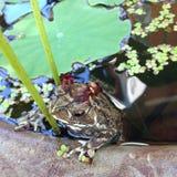 The frog Princess Royalty Free Stock Photos