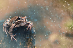 Frog in rain forest Royalty Free Stock Image