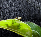 Frog on a rainy day stock photo
