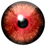 Frog red animal eyeball isolated. White background, black pulpil, eye texture 3d stock images