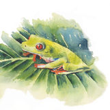 Frog red-eyed tree frog on leaf watercolor illustration isolated on white background Stock Images