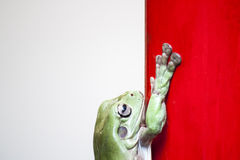 Frog on the red and white background. A frog be right next to a red and white background royalty free stock photos