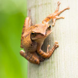 Frog resting at tree Royalty Free Stock Photography