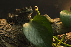 Frog resting on wood near leaf Stock Images