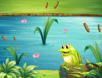 A frog at the riverbank Stock Images