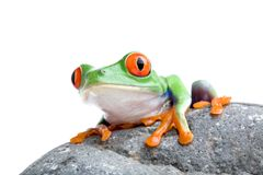 Frog on a rock Stock Photo