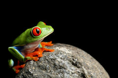 Frog on a rock isolated black Stock Image