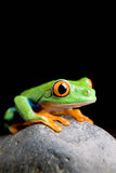 Frog on a rock isolated black Stock Photography