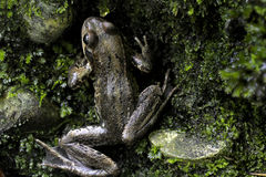 Frog on rocks seen from above Stock Photos