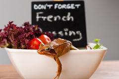 Frog on the run, escaping from a french salad plate. It´s a spring frog (Rana dalmatina). Royalty Free Stock Image