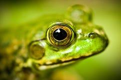Frog's Head Stock Image