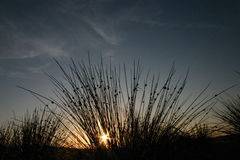 A Frogs Perspective. Sunrise from behind the reeds Stock Photo