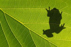 Frog's silhouette Royalty Free Stock Images