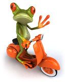 Frog on a scooter Stock Photo