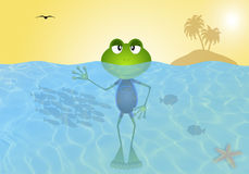 Frog in the sea Royalty Free Stock Images