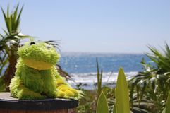 The Frog and the Sea Royalty Free Stock Photo