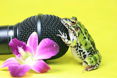Frog Setting by Microphone Royalty Free Stock Images