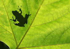 Frog shadow. On the leaf Stock Images