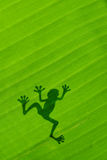 Frog shadow on the banana leaf Royalty Free Stock Image