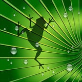 Frog shadow is on Green Tone Leaf Royalty Free Stock Images