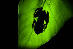 Frog shadow on the leaf Stock Images