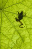 Frog Silhouette Stock Photo
