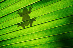 Frog Silhouette Stock Photos