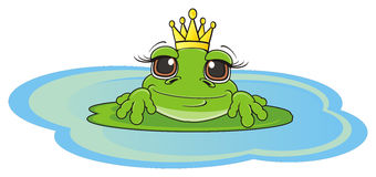 Frog sit on the water Stock Images