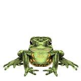 Frog sits vector illustration