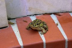 Frog sitting around a white wall stock photo