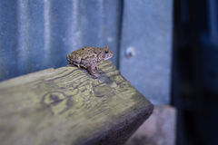 Frog sitting on a brown log Royalty Free Stock Images