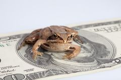 Frog sitting on the dollar Royalty Free Stock Photo