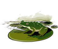 Frog Sitting On Leaf Stock Photography