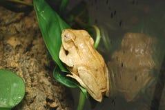 Frog sitting on a leaf Stock Images