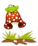 Frog sitting on a mushroom Stock Image