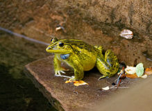 A frog sitting out in the rain stock photo