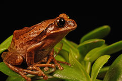 Frog sitting on plant Royalty Free Stock Photo