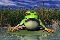 A Frog Sitting In Pond Stock Photo