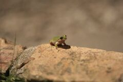 Frog sitting on rock