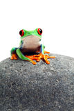 Frog sitting on rock isolated on white Stock Photography