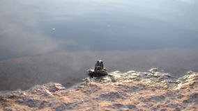 Frog sitting on the rock in the water.  stock video