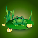 Frog sitting on water lily leaf Royalty Free Stock Image