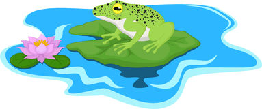 Frog sitting on Water lily leaf Royalty Free Stock Photography