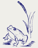 Frog sketch Stock Image