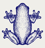 Frog sketch Royalty Free Stock Photos
