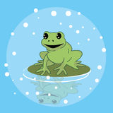 Frog smile character above leaf in pond funny cute Stock Photos