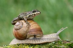 Frog on snail stock photos