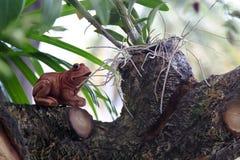 Frog statue in garden. Frog garden,body ceramic,toy,concrete Stock Photography